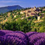 Blooming lavender field in Aurel hilltop village, Sault en Vaucluse, Provence, France